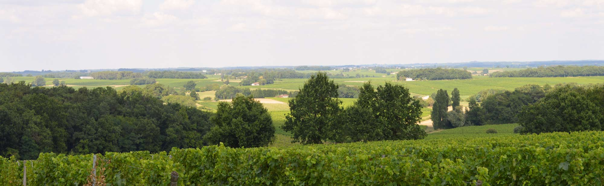 panorama_duprais_vignoble